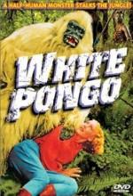 Beyaz Pongo