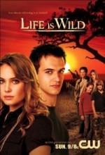 Life ıs Wild
