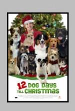 Noel'in 12 Köpeği (2014) afişi