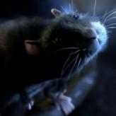 One Rat Short  afişi