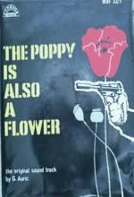 Papavero E Anche Un Fiore
