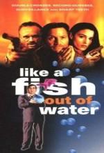 Sudan Çıkmış Balık