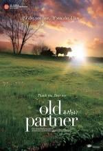 Yaşlı Ortak