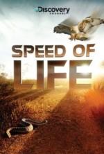 Yaşamın Hızı (2010) afişi