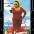 Pembe Flamingolar Resimleri