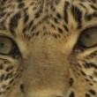 Vahşi Kedilerle Yaşam Resimleri
