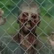 The Walking Dead Sezon 4 Resimleri
