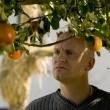 Adem'in Elmaları Resimleri