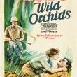 Vahşi Orkide Resimleri