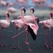 Pembe Kanatlar: Flamingolarin Gizemi Resimleri