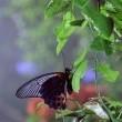 Kelebeğin Hikayesi 3d Resimleri
