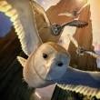 Baykuş Krallığı Efsanesi Resimleri 15