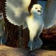 Baykuş Krallığı Efsanesi Resimleri