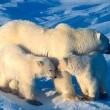 The Great Polar Bear Adventure Resimleri