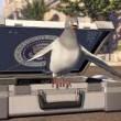 Pigeon: Impossible Resimleri