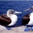 Galapagos: The Enchanted Voyage Resimleri