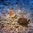 3 Boyutlu Derin Deniz Resimleri