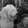 The Shaggy Dog(ı) Resimleri