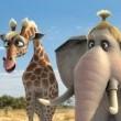 Sevimli Hayvanlar Resimleri