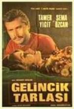 Gelincik Tarlası (1968) afişi