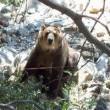 Grizzly Falls Resimleri