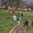 Jurassic Park Resimleri