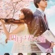 Your Lie in April Resimleri