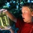 Catching Fireflies Resimleri