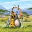 Madagaskar 2 Resimleri