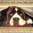 Afacan Köpek Beethoven Resimleri
