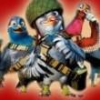 Kahraman Güvercin Resimleri